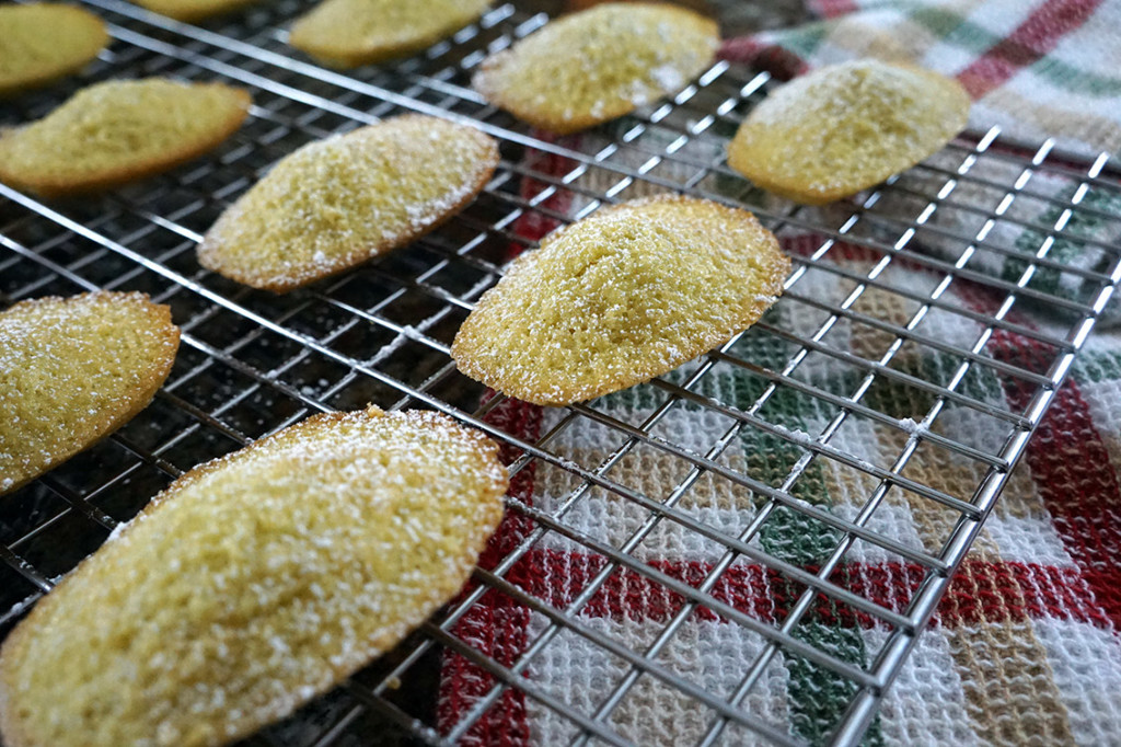 Close up of baked madeleines on a cooling rack topped with powdered sugar